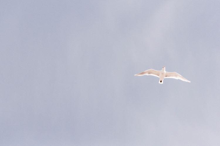 Looking up at flying bird