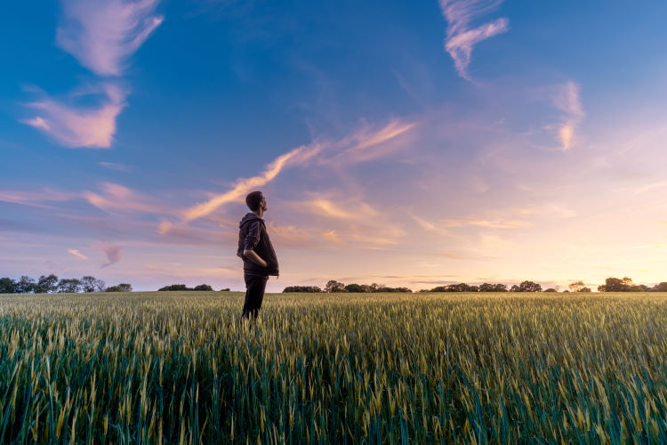 A man standing in a field of wheat looking at a stunning sunset