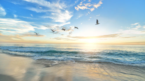A view of the ocean from the beach featuring birds flying as the sun rises